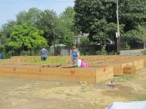 Community garden at  Bruce Monroe Park