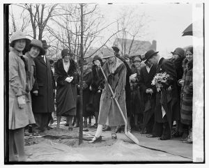 First Lady Grace Coolidge plants a tree at the Chevy Chase playground, February 28, 1929.