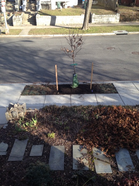 tree planting swo