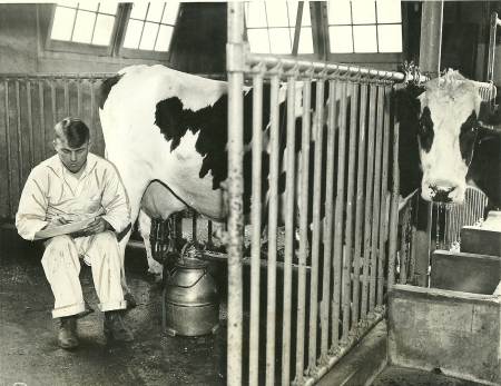 Mechanical milking