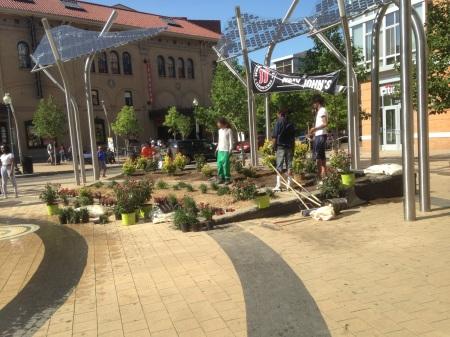 Plaza plantings 2