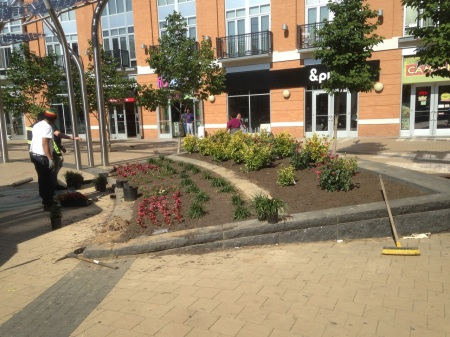 Plaza plantings