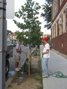 ANC1A Commissioners Richard DuBeshter and Kent Boese watering trees on Otis Place
