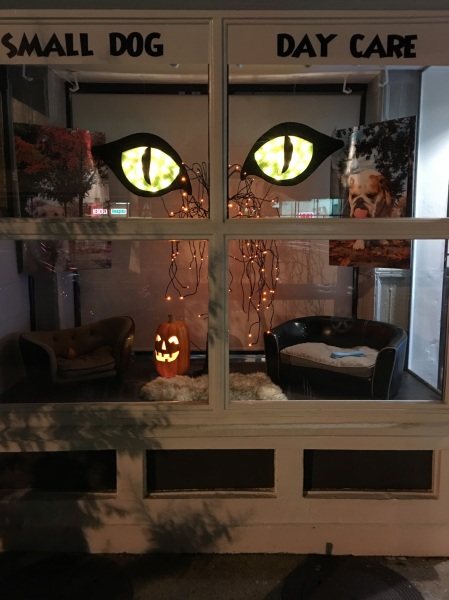 patricks-pet-care-halloween